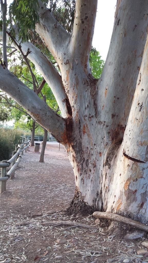 árbol que se distingue como primer plano