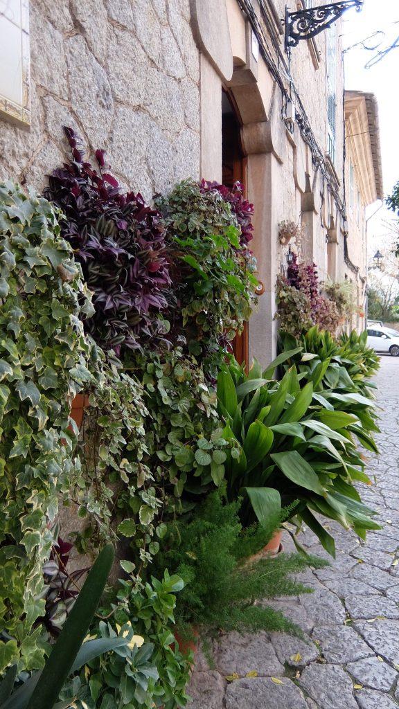 Plantas-e1481212852533.jpg