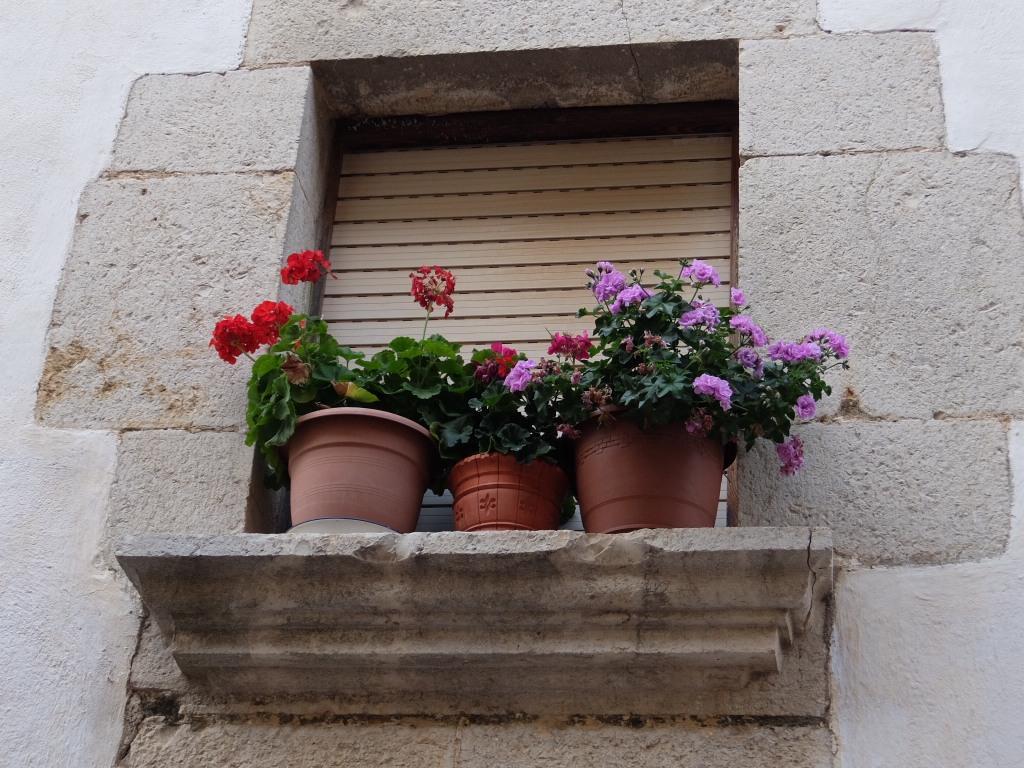 Flores que alegran la vista. No hace falta mucho para ser feliz